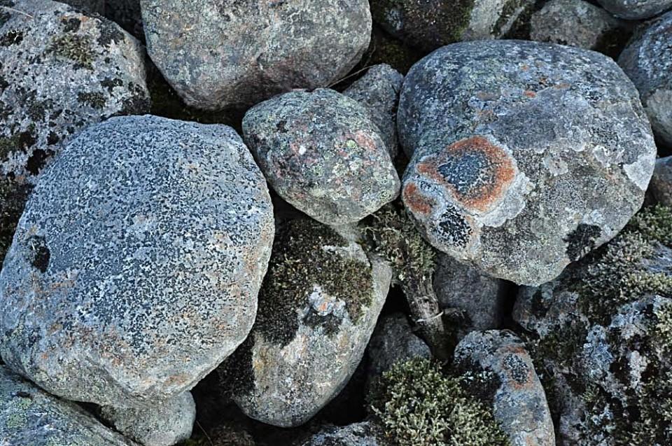 Vackra gråstenar med mossa och lavar